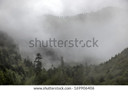 Clouds in the mountains woods - stock photo