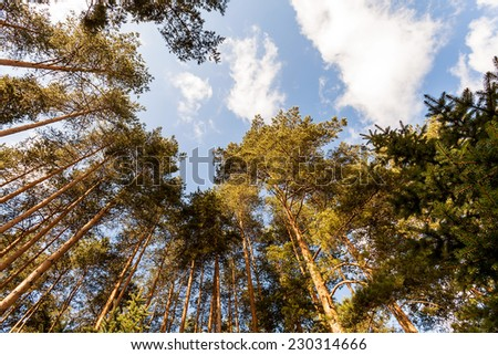 Clouds in the woods - stock photo