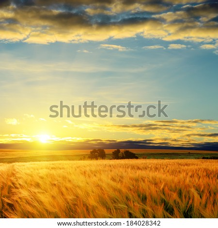 clouds on sunset over field with barley - stock photo