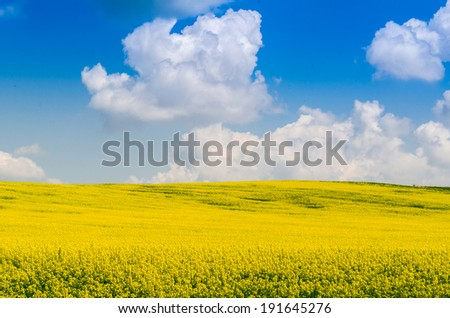 Clouds over a yellow field
