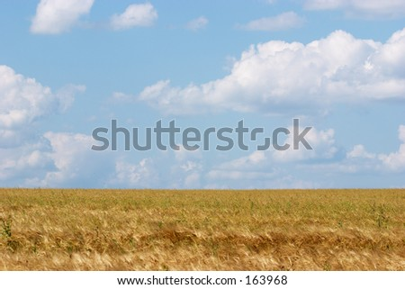 Clouds over Field of Wheat