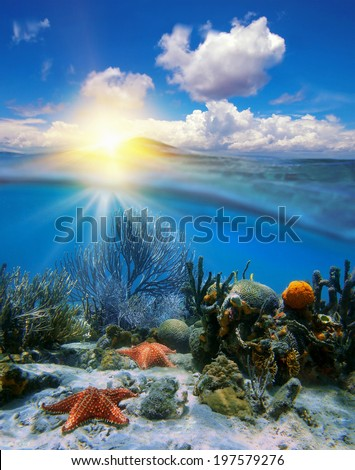 Cloudy blue sky with sunset at horizon and split by waterline, underwater corals with sea stars - stock photo