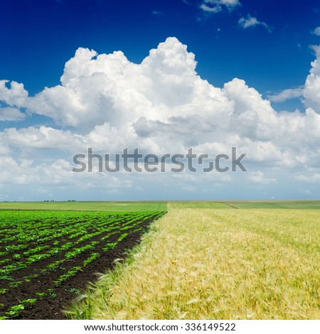 cloudy sky over agriculture fields - stock photo