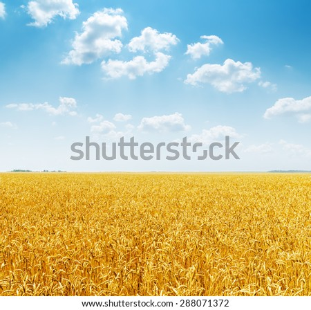 cloudy sky over golden field - stock photo