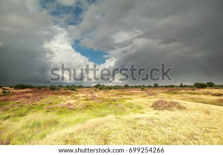 cloudy sky over wild meadow in summer