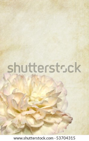 Clove-pink flower over grungy vintage background. Detailed texture. Copy-space. - stock photo