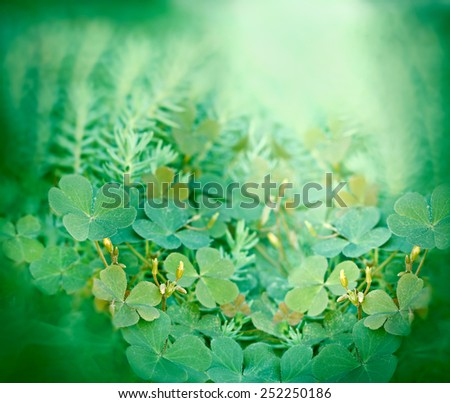 Clover and little yellow flowers  - stock photo