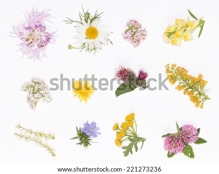 clover, chamomile, yarrow, burdock, knapweed and other wild flowers gathered in a bouquet on a white background - stock photo
