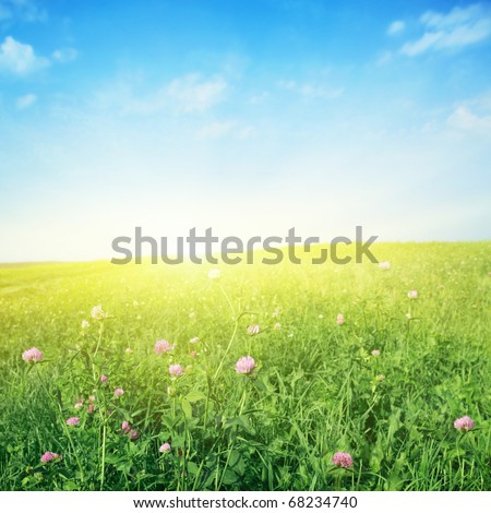 Clover field,blue sky and sun.