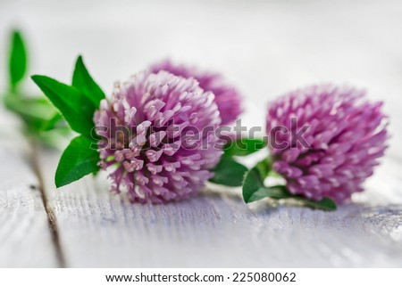 clover flowers on white background - stock photo