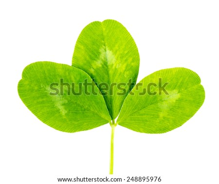 clover green leaf Isolated on white background - stock photo