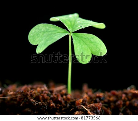 Clover growing from the soil - stock photo