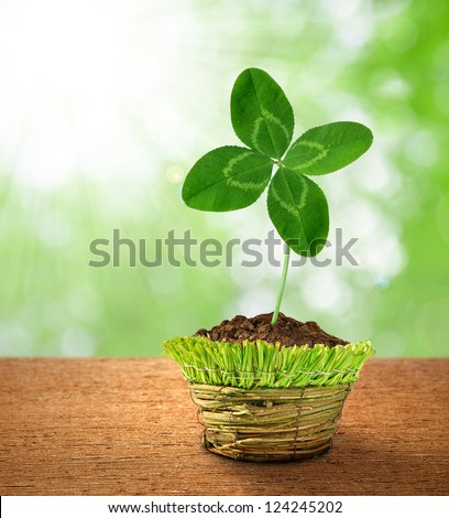 Clover in decorative pot on green background - stock photo