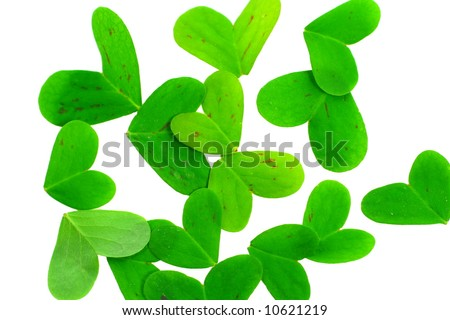 clover leafs on a white background - stock photo