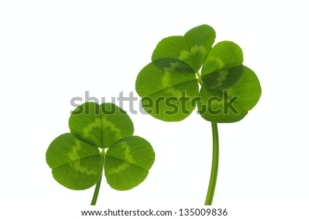 Clover of four leaves and Shamrock - stock photo