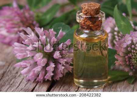 clover oil in a bottle on the table and flowers macro horizontal  - stock photo