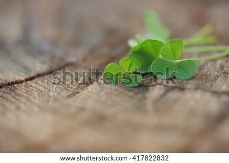 Clover on a wooden background