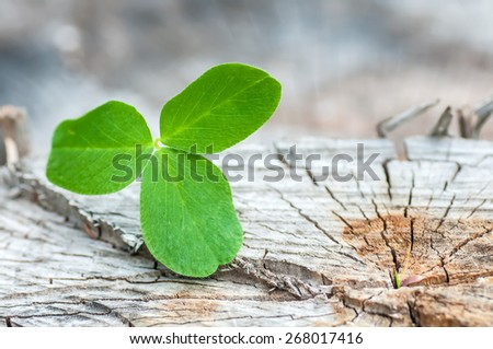 clover on the old wooden background - stock photo