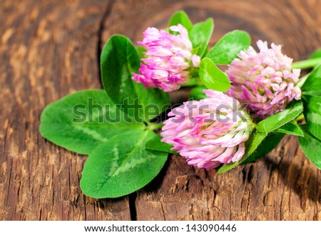 clover on wooden background close-up - stock photo