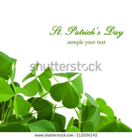 Clover plant macro shot, isolated on white background - stock photo