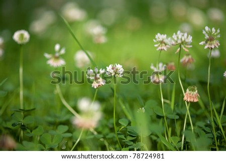 Clovers with flowers and grass - stock photo