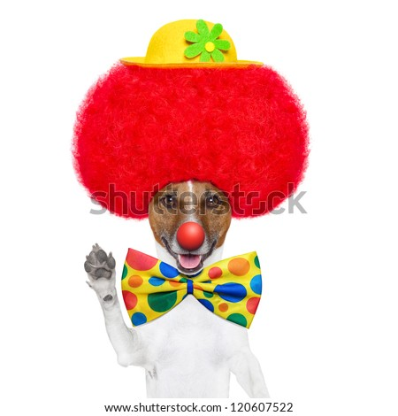 clown dog with red wig and nose waving hello - stock photo