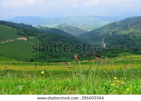 Clump of grass plant in natural habitat - stock photo
