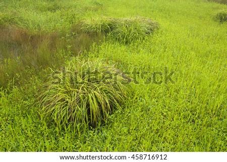 True nature 39 s portfolio on shutterstock for Ornamental sea grass