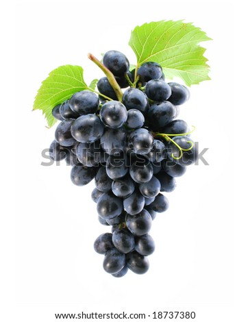 cluster of blue grape isolated on white background - stock photo