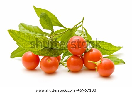 cluster of cherry tomatoes
