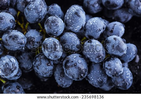 cluster of grapes and water drops - stock photo