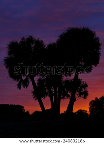 Cluster of Palm Trees at sunset - stock photo