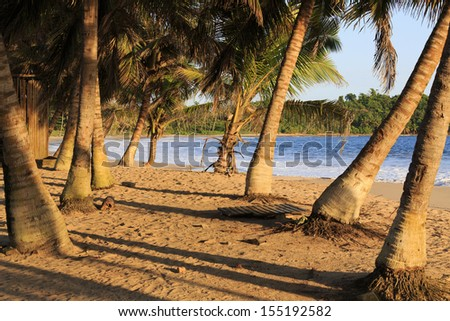 Cluster of palm trees on an African beach at sunset in Axim, Ghana - stock photo