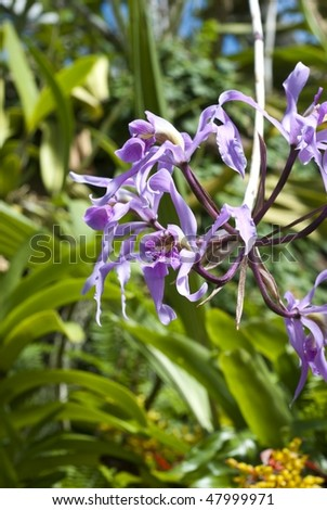 Cluster of wild orchids - stock photo