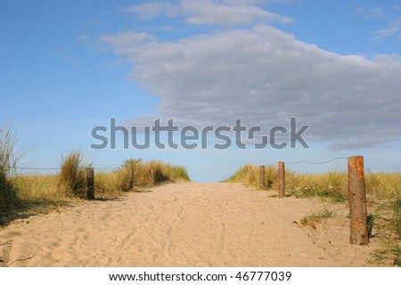 Clusters of yellow grass along a footpath in the sand dunes, against a bright blue sky, on the shore of the Baltic Sea, Germany. - stock photo