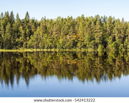 coast of forest lake and reflections in water