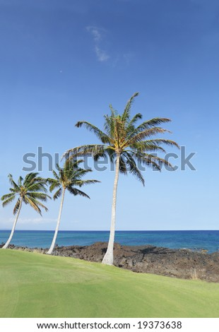 Coast of Hawaii Kona Island with Palms on Green and Black Volcanic Lava Soil - stock photo