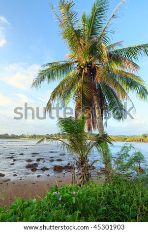 Coast of morning and coconut tree