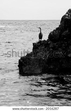 coast with bird - stock photo