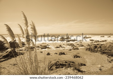 Coastal image, rocky foreshore and pampas grass in sepia. - stock photo