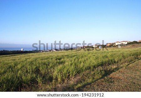 Coastal landscape view from Mhlanga Ridge of sugar cane field Indian ocean and Durban City skyline in  South Africa - stock photo