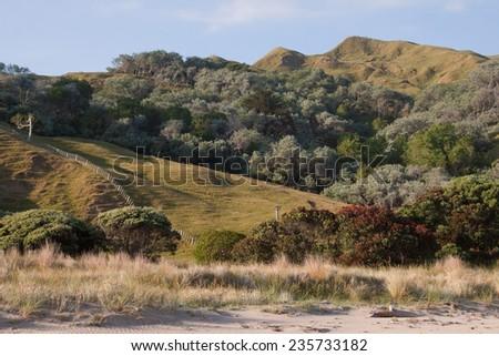 Coastal New Zealand landscape with pohutukawa tree  - stock photo