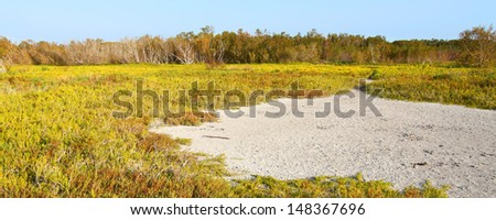 Saltwort Beach South Carolina