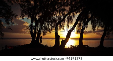 Coastal trees in silhouette as the golden sun sets over the sea.