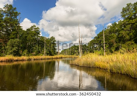 Coastal Wetlands in North Carolina - stock photo
