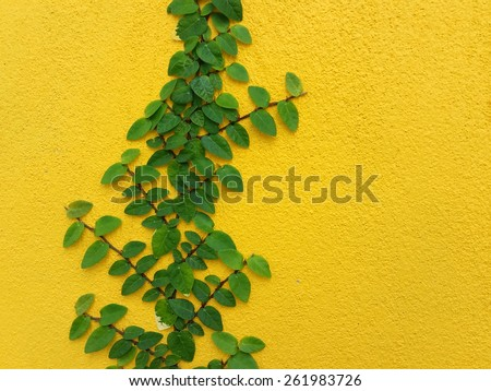 Coatbuttons Mexican daisy plant on yellow wall with space - stock photo