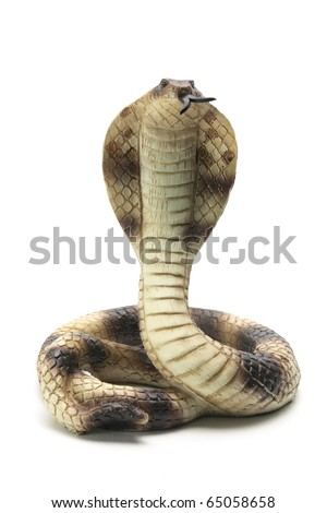 Cobra on White Background - stock photo