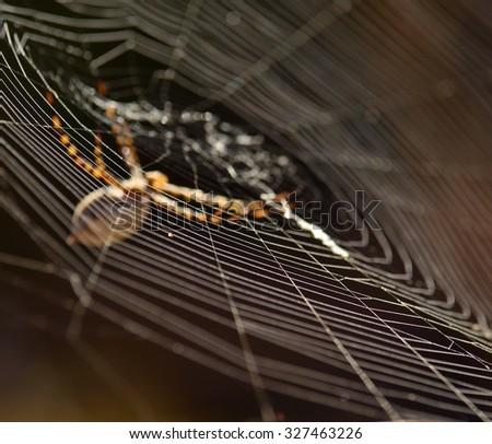 Cobweb and argiope - stock photo