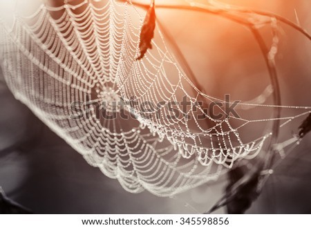 Cobweb in dew drops early in the morning. Cobweb in dew drops at sunrise. - stock photo