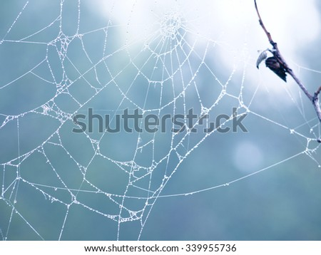 Cobweb in the forest - stock photo